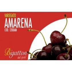 VARIEGATO AMARENA C