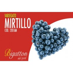 VARIEGATO MIRTILLO