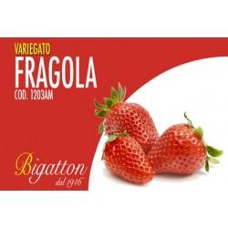 VARIEGATO FRAGOLA
