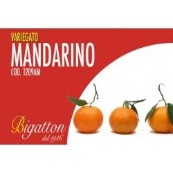 VARIEGATO MANDARINO